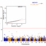 SMCHD1 mutations associated with a rare muscular dystrophy can also cause isolated arhinia and Bosma arhinia microphthalmia syndrome